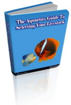 The Aquarists Guide To Selecting Your Livestock