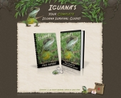 Iguana Survival - Minisite Template with Personal Use Rights
